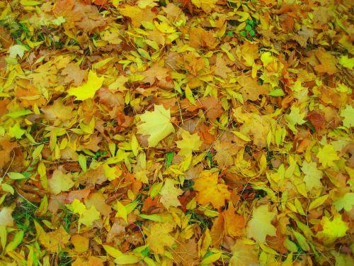lapai,tekstūra,gamta,natūralus,medinis,sodas,lapija,žalias,medis,geltona,raudona,vasara,parkas,ežeras,Lenkija,Europa,centrinė europa,vakaruose,dangus,grindys,puodelis