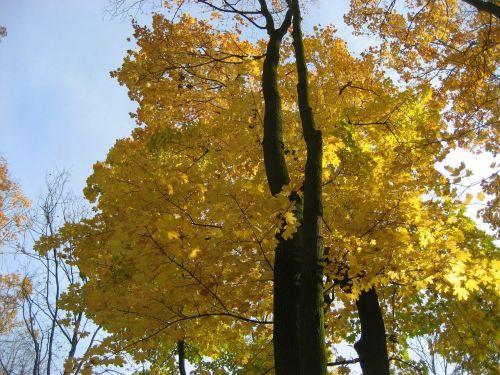 lapai,tekstūra,gamta,natūralus,medinis,lapija,žalias,medis,geltona,raudona,vasara,parkas,ežeras,Lenkija,Europa,centrinė europa,vakaruose,dangus,grindys,puodelis