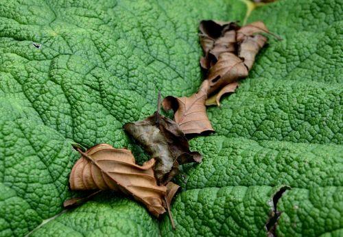 lapai,nudrus,žalias,ruduo,sausas,nudrus,rudens nuotaika