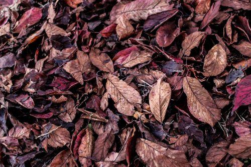 lapai,ruduo,kritimo spalvos,sausas lapas,gamta,sausas medis,lapai džiūsta,sausas lapai,sausas šakeles,kraštovaizdis,žalias,miškai,seni lapai,nukritę lapai