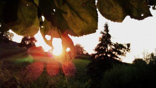 lapai, saulė, saulėlydis, augalas, filialai, žalias, estetinis, vasara, kraštovaizdis, gamta, oranžinė, šviesa, lichtspiel, medžiai, laukas, Žemdirbystė, perspektyva, peizažai