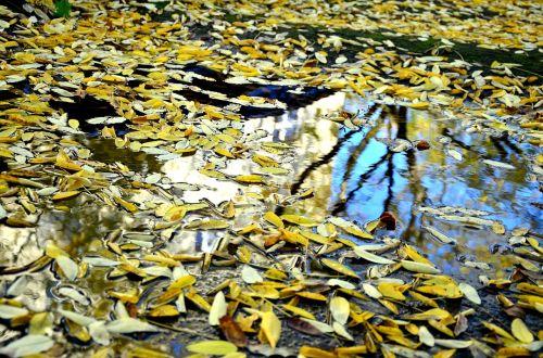 lapai,ruduo,peizažas,veidrodis,aukso ruduo,palieka rudenį,kritimo lapija