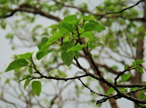 medis, lapai, žalias, filialai, arty, palieka & amp, filialai