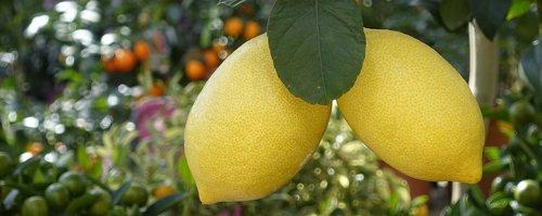 citrinos, medis, valgyti, Citrusiniai vaisiai, vaisių, Viduržemio jūros, sveiki, vitaminai, vaisiai, maisto, apvalkalas, oranžinė, rūgštus, header, vėliava