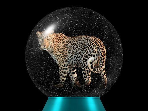 leopardas,gyvūnų pasaulis,didelė katė,plėšrūnas,stiklo rutulys,katė,Wildcat,laukiniai,rutulys,stiklas,sniego rutulys