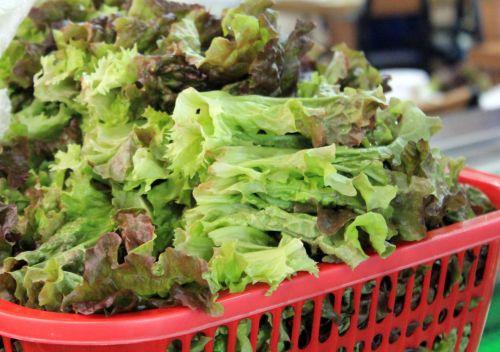 žalios & nbsp, lapinės ir nbsp, daržovės, žalia & nbsp, lapinė, daržovės, lapinės, žalias, salotos
