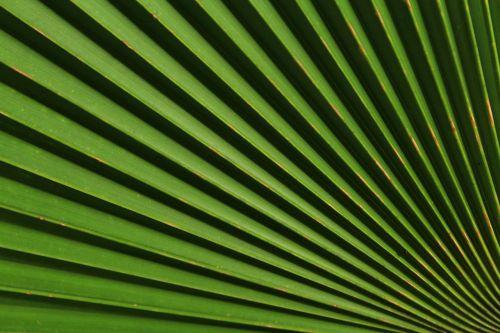 šviesa,šešėlis,gražus,dėmesio,centras,žalias,tamsiai žalia,šviesiai žalia,linija,įdomus,spalvingas,estetinis,lapai,gamta,jogžakarta,klaten,surakarta,indonesian,milanas