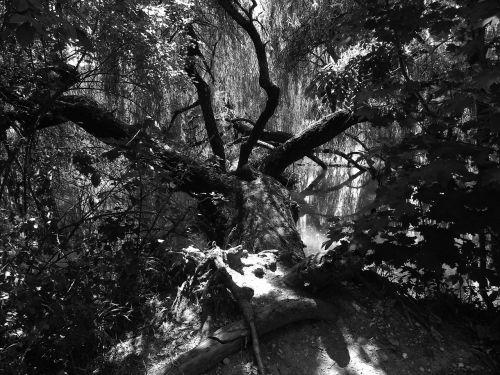 šviesa,šešėlis,šešėlių žaidimas,Fotografas