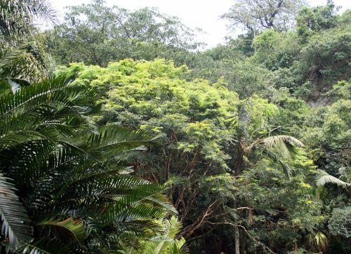 augmenija, augalai, delnus, medis, žalias, sodrus, šviesa į subtropinę augmeniją