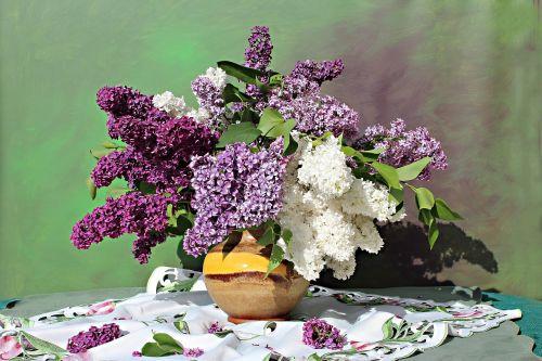 alyvinė puokštė,alyvinė gėlė,natiurmortas,gamta,dekoratyvinis krūmas,violetinė,žydėti,Alyva,flora,augalas,aromatingas,dekoratyvinis,gėlės,pavasaris,violetinė,puokštė,šviesus,sodas,alyvinė šaka,dekoratyvinis augalas,kvapus augalas,sodo augalas,staltiesė,mišrus puokštė,deko