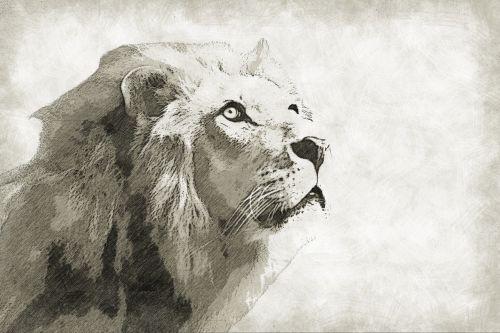 liūtas,žinduolis,gyvūnas,laukiniai,laukinė gamta,karalius,portretas,fauna,leo,katė,plėšrūnas,galva,veidas,eskizas,piešimas,pieštuko pieštukas