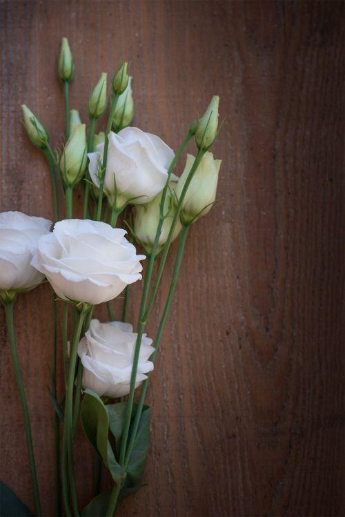 Lisianthus,gėlė,žiedas,žydėti,balta,balta gėlė,žiedlapiai,schnittblume,varginantis,saldus,mediena,medžio fonas,Uždaryti