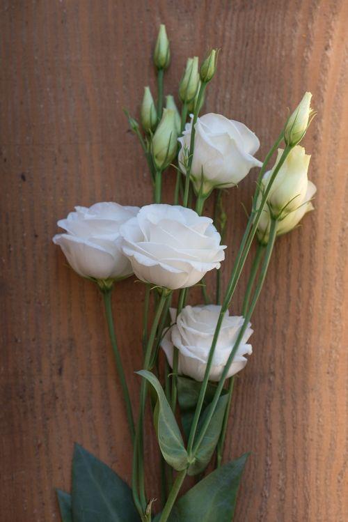 Lisianthus,gėlė,žiedas,žydėti,balta,balta gėlė,žiedlapiai,schnittblume,varginantis,saldus,mediena,saulės šviesa,Uždaryti