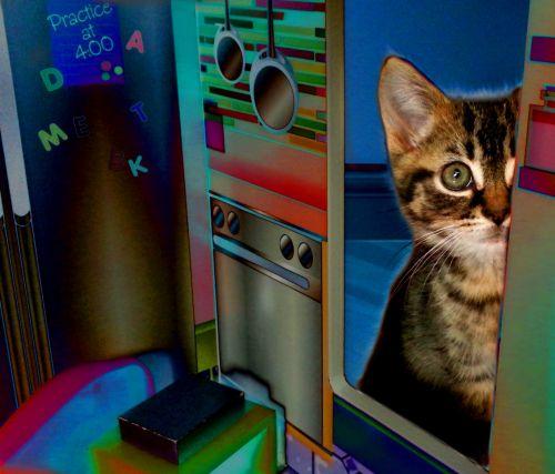 katė, naminis gyvūnėlis, kačiukas, kačiukas, tabby, gyvūnas, lėlės & nbsp, namas, mažas kačiukas