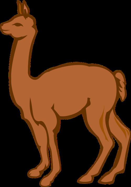 lama,padaras,ūkis,gyvūnas,ruda,stuburas,kupranugaris,gyvuliai,Peru,kanopas,nemokama vektorinė grafika
