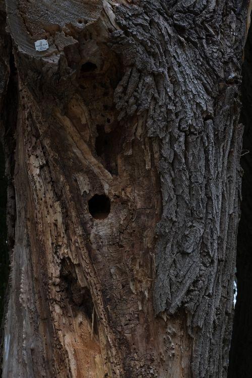 žurnalas, negyvas augalas, gamta, mediena, medis, senas, gnarled, ištemptas, morsch, žievė, sausas, gentis, kelmas, skilimas, senas medis, miręs medis, negyvas medis, miręs, ruda, mirtis, liūdnas
