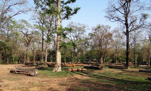 medienos ruoša, miškininkystė, mediena, mediena, žurnalas, miškas, krūva, mediena, depas, dandeli, Karnataka, Indija