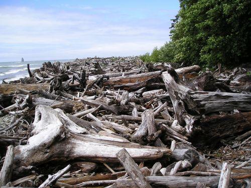 logjam, upė, vanduo, žurnalas, mediena, medžiai, upės krantas, gamta, galūnės, miręs, krūva