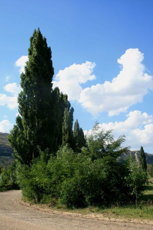 purvinas & nbsp, kelias, kreivė & nbsp, kelio, medžiai & nbsp, keliuose, žalias, mėlynas & nbsp, dangus, gamta, dienos & nbsp, laikas, baltieji & nbsp, debesys, lombardi tuopa