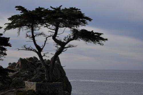 Kipras, vienišas, vandenynas, 17 mylių & nbsp, vairuoti, izoliuotas, vaizdingas, kraštovaizdis, vienišas kipras