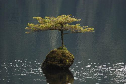 kraštovaizdis, vaizdingas, Rokas, medis, simbolinis, nustatymas, viešasis & nbsp, domenas, tapetai, fonas, dykuma, fėja ir ežeras, Vankuveris & nbsp, sala, Kanada, įveikti, ramus, ikvepiantis, įkvepiantis, vienišas medis pasakų ežere