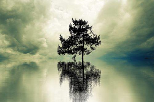vienatvė,medis,vienišas,kraštovaizdis,palikti,poilsis,vis dar,vienišas medis