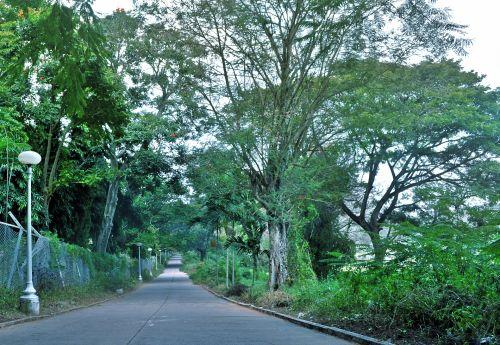 kelias, praėjimas, alėja, miškas, medžiai, gamta, ilgas kelias