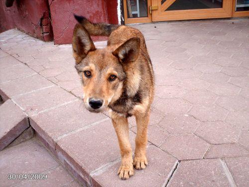 Astronija, benamiai, šuo, įdomu, atrodo, prestižas, atrodo smalsus šuo
