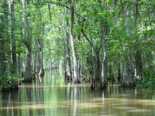 Luiziana,pelkė,Houma,la,gamta,medžiai,vanduo,ežeras,upė,egzotiškas,atogrąžų miškas,vasara,pavasaris