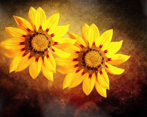 pietūs aukso gėlės,gėlės,gėlė,geltona,aukso vidurdienis,menas