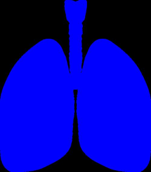 plaučiai,Žmogaus kūnas,anatomija,kūnas,žmogus,medicinos,sveikata,biologija,plaučių,piktograma,vidinis,anatominis,fiziologija,simbolis,krūtinė,sveikatos apsauga,kvėpavimo takai,nemokama vektorinė grafika