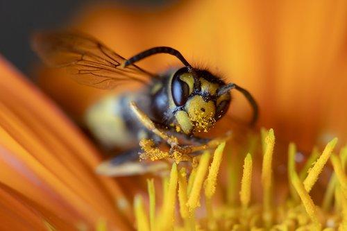 makro, makro fotografija, vabzdys, pobūdį, Nature Photography, sonya6300, vabaliukas, drugelis, Re, Sodas, bičių, vapsva, Mikro-fotografija, junginys akių, Micro nuotrauka, Mikro fotografija, gėlė, makro nuotrauka