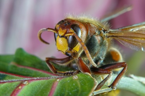makro nuotrauka, makro, makro fotografija, vabzdys, pobūdį, Nature Photography, sonya6300, vabaliukas, drugelis, Re, Sodas, bičių, vapsva, Mikro-fotografija, junginys akių, Micro nuotrauka, Mikro fotografija, gėlė