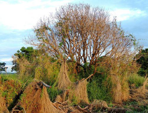 magija,medis,sausas,šakelės,sausas medis,senas medis,ruduo,sausas šakeles,gamta,sausas lapai,lapai,sausas lapas,bagažinė,aistra,lapai džiūsta,sol,mediena,kritimo spalvos