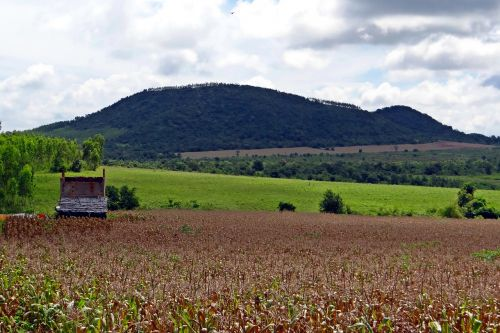 kukurūzai,auginimas,kukurūzai,derlius paruoštas,kalvos,vaizdas,dangus,debesys,per naktį,Hubli-Siris kelias,uttar kannada,Indija
