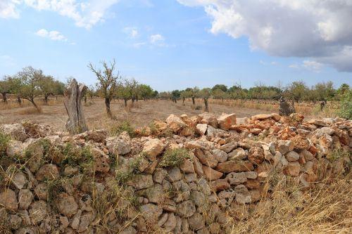 Maljorka,kraštovaizdis,akmeninė siena,gipso kartonas,sausa akmens siena,siena,mūra,gamta,šventė,Ispanija,Balearų salos,akmuo,uolingas,fasadas,idiliškas,tanca-siena,tanca siena,tancamaueris,įspūdis
