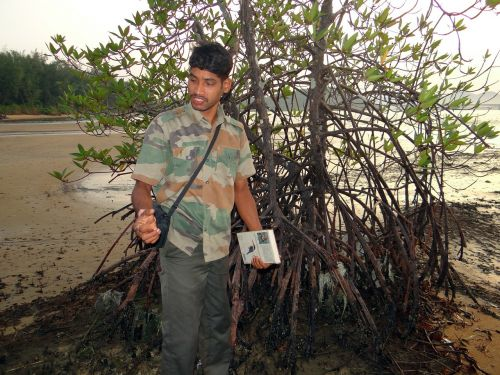 mangroviai,miškas,gidas,pelkė,oro šaknys,karwar,Indija