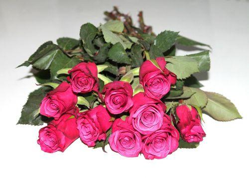 daug rožių,rožės,puokštė,gėlės,romantika,raudona,gėlė,Raudona roze,fonas,valentinas,raudona gėlė,meilė