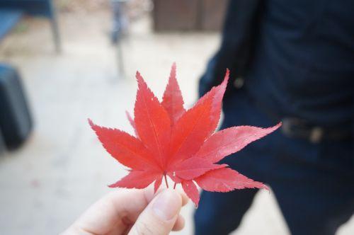 klevo lapas,ruduo,lapai,lapai,gamta,lapai,rudens lapai,kraštovaizdis