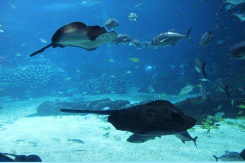 jūrų akvariumas,jūrų augalija ir gyvūnija,žuvis