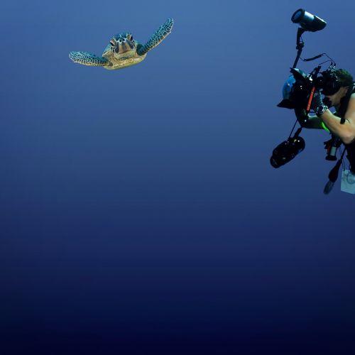 jūrų augalija ir gyvūnija,vėžlys,povandeninis