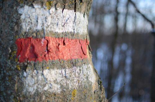 ženklas,apvalus,migracijos pobūdis,požymiai,gentis,medis