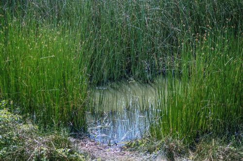 pelkė, drėgnas & nbsp, žemė, pelkės, pelkė, vanduo, gamta, lauke, žolė, pelkė