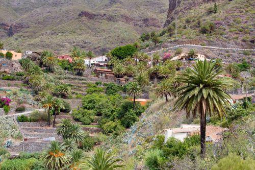 Canary & nbsp, salos, Ispanija, Tenerifė, kalnai, masca, panorama, kaimas, atsiskaitymas, kraštovaizdis, gėlės, slėnis, Masca kaimas