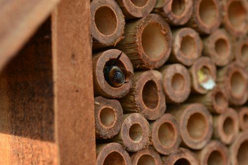 masonas bičių,bičių,Osmija,vabzdžių namai,bambukas,namų ūkis,valymo kamera,vabzdžiai,Iš arti,purvas,tuščiaviduriai vamzdžiai,būsto lizdą,vienišas bičių