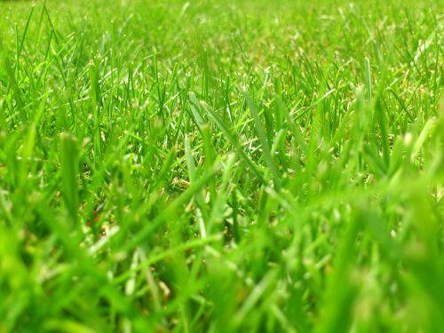 pieva,skubėti,žolė,žalias,žolės mentė,žolės,gamta,fonas,Halme,žolės žolės,aplinka,vasara,pavasaris,lauke,žoliapjovė,genėjimo žirklės,sodas