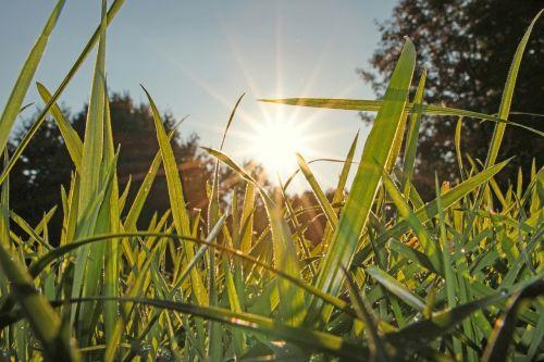 pieva,žolė,gamta,žalias,žolės,žolės mentė,frisch,Uždaryti,sultingas,rasa,žole pieva,struktūra,lašelinė,pavasaris,vasaros pieva,kraštovaizdis,skubėti,rasos rasos,aukšta žolė,augalas,Halme,žalia žolė
