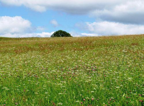 pieva,gėlių pieva,gamta,pavasaris,gėlės,žolė,vasara,žydėti,Uždaryti,pavasario pieva,vasaros pieva,žalias