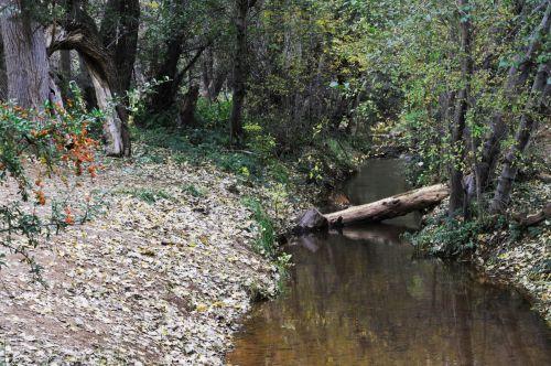 srautas, upė, srautas, miškas, ruduo, kritimas, žurnalas, tylus, atspindėti, atspindys, kaimiškas, Meandering atspindinti srautas