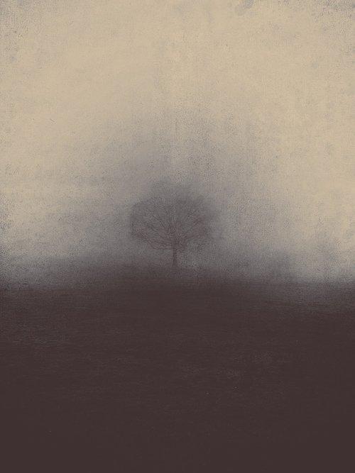 Misty, rūkas, Gamta migla, rūkas, niūrus, baisu, kraštovaizdis, bauginantis, mediena, Mystic, rūkas, tamsiai, baugus, Londonas, rytą, dangus, mįslingas, svajoti, medis, vien, atmosferos, pasaka, stebuklinga, mistinis